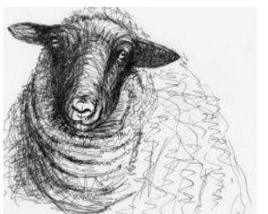 henry-moore-sheep-sketch